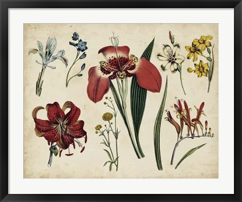 Framed Antique Botanical Chart II Print