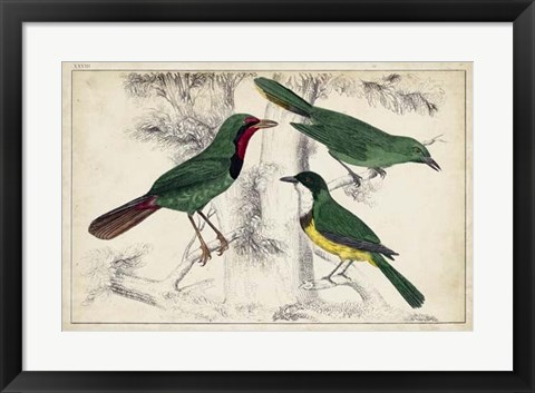 Framed Tropical Bird Trio I Print