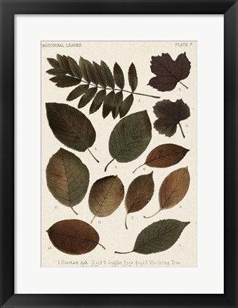 Framed Autumnal Leaves II Print