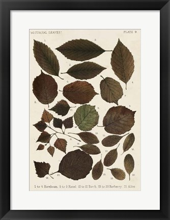 Framed Autumnal Leaves VI Print
