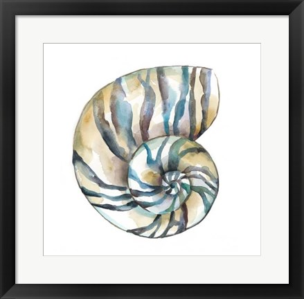 Framed Aquarelle Shells II Print