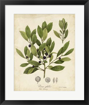 Framed Ink-berry Tree Foliage Print