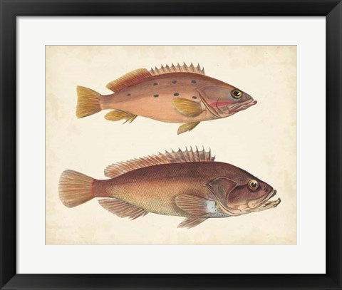 Framed Antique Fish Species I Print