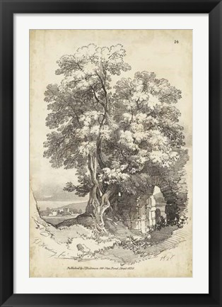 Framed Noble Tree II Print