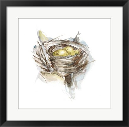 Framed Bird Nest Study III Print