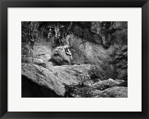Framed Lion I Print