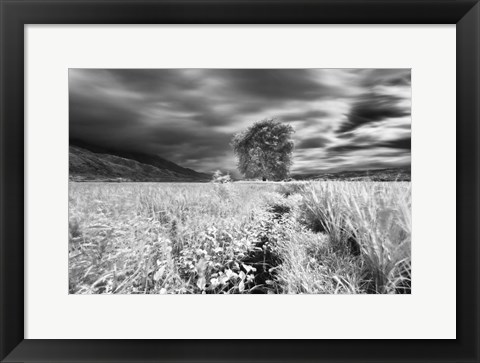 Framed Lone Tree, Dingalan Print