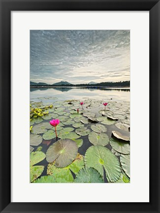 Framed Morning Lilies Print