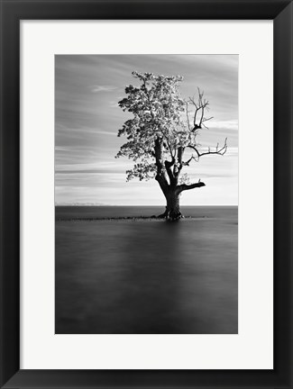 Framed Solitude Print