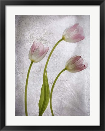 Framed 3 Tulipanes Con Red B Print