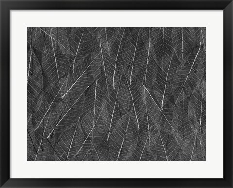 Framed Leaves 1 Print