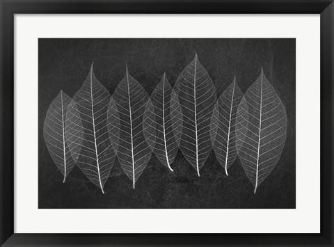 Framed Leaves 3 Print
