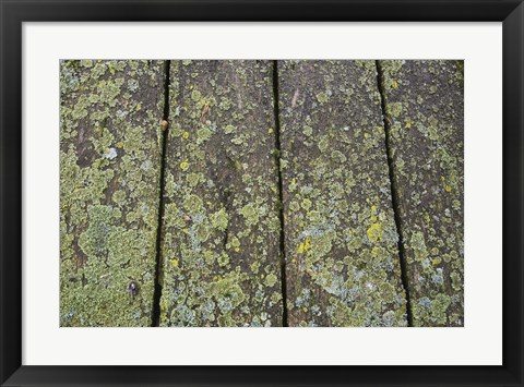 Framed Close of Pier with Speckled with Moss Print