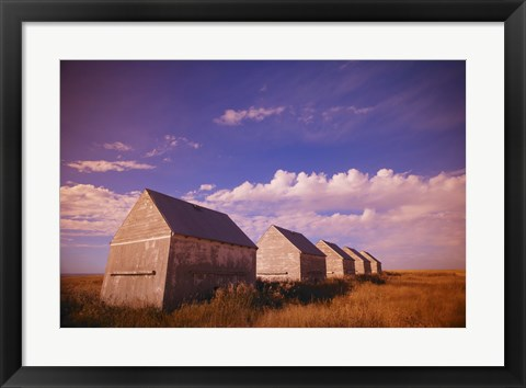 Framed Old White Sheds in a Field Print