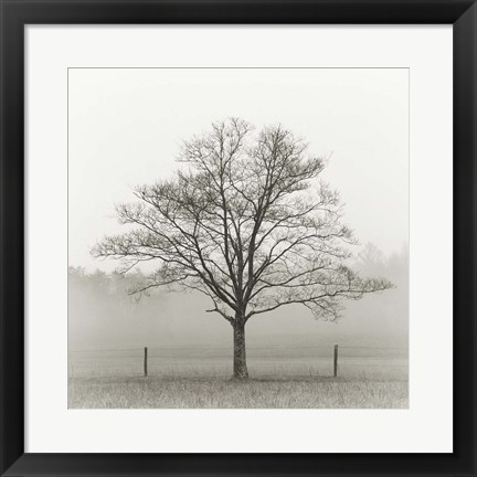 Framed Winter Tree, Cades Cove Print