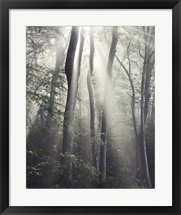 Framed Woodland Sun Print