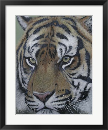 Framed Sumatra Tiger Face Print