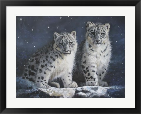 Framed Young Snow Leopards Into the Dark Print