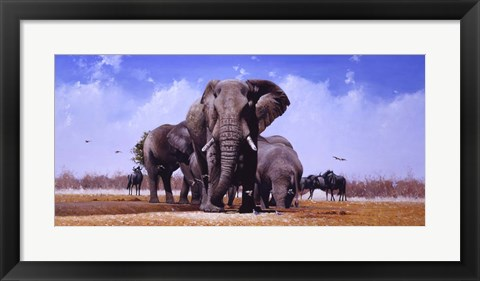 Framed King Of Marabou Pan Print
