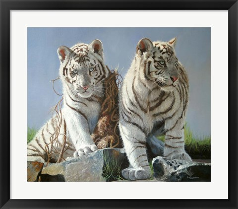 Framed White Tiger Cubs Playing Print