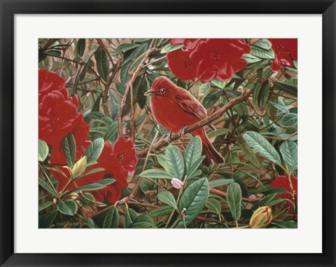 Framed Summer Tanager Print