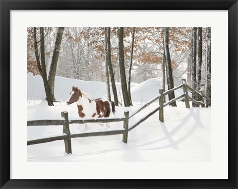 Framed Athena in the Snow, Farmington Hills, Michigan 09 Print