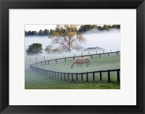 Framed Horses in the Mist #3, Kentucky 08 Print