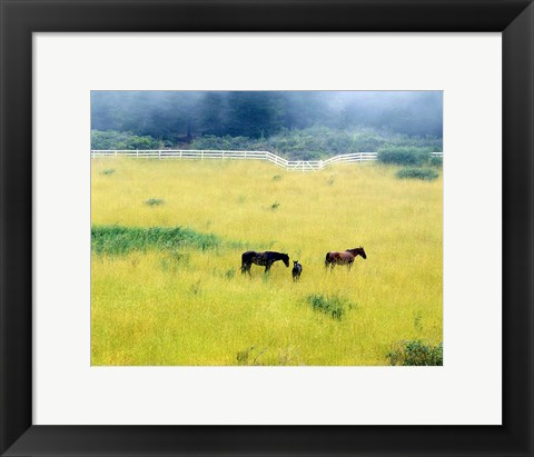 Framed Serenity, California 86 Print