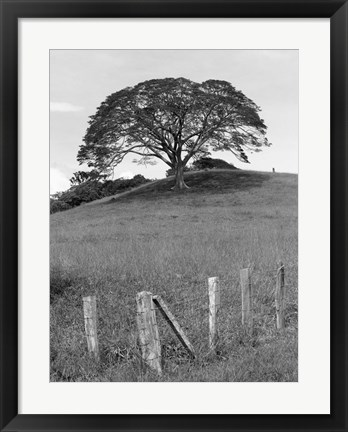 Framed Lone Tree & Fence, Costa Print