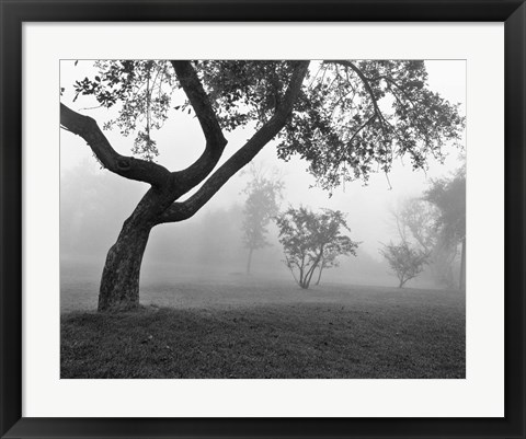 Framed Morning Mist, Farmington Hills, Michigan 82 Print