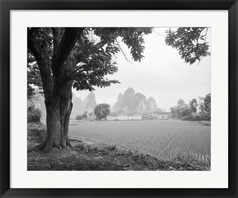 Framed Rice Field #1 Print