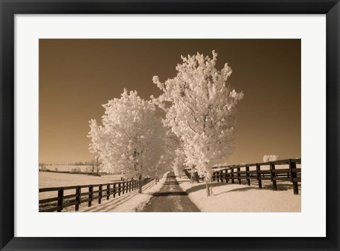 Framed Fence & Trees, Kentucky 08 Print