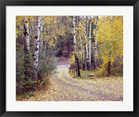 Framed Birch Tree DriveFence & Road, Santa Fe, New Mexico 06 Print