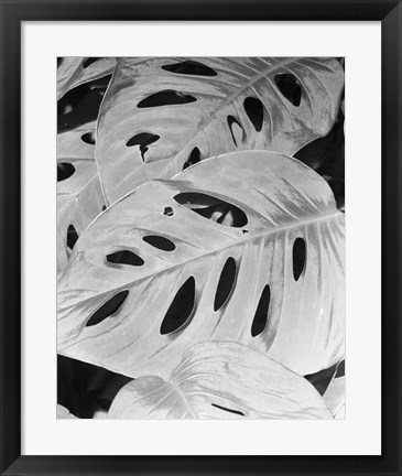 Framed Philodendron, Michigan 86 Print