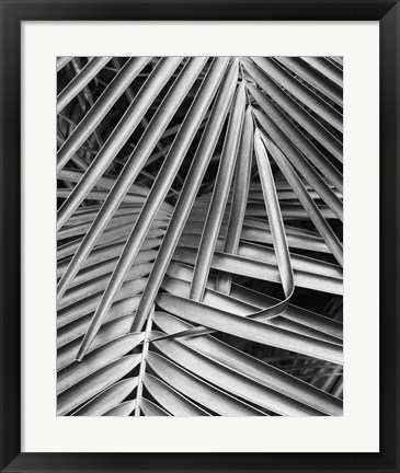 Framed Cycad, Michigan 80 Print