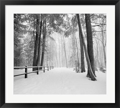 Framed Winters Path Print