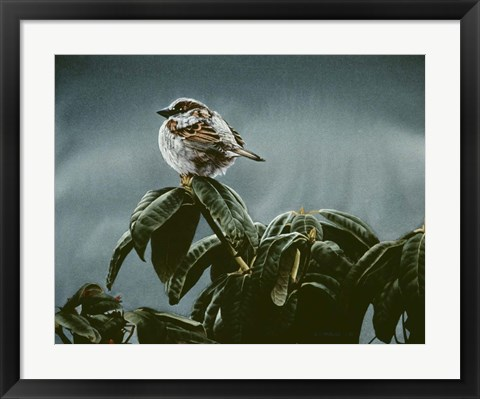 Framed Sparrow On Rhododendron Print