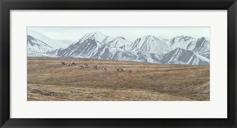 Framed Northern Skyline - Caribou Print
