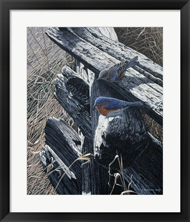 Framed Bluebirds On Rail Fence Print
