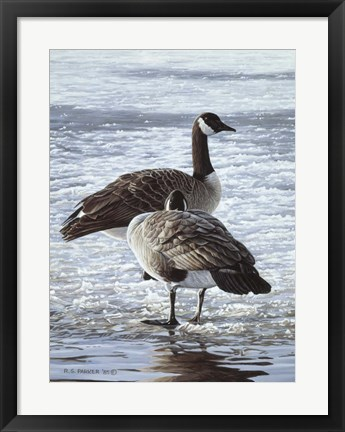 Framed Freeze Up- Canada Geese Print