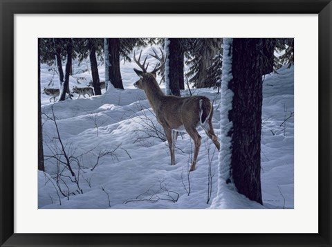 Framed Whitetail & Wolves Print