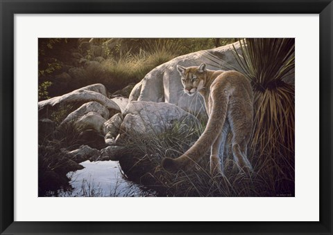 Framed Creekside Cougar Print