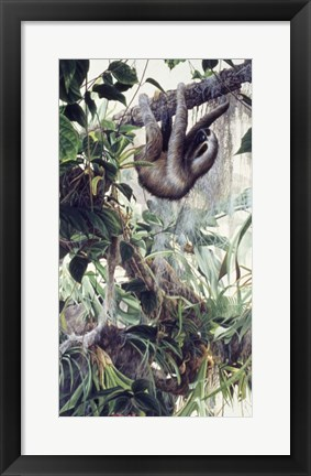 Framed Sloth Print