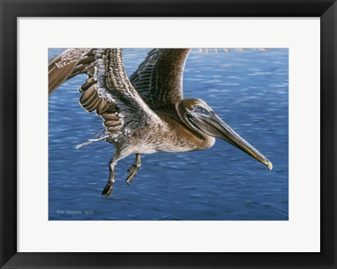 Framed Flying Pelican Print