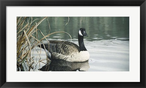 Framed Tranquil Water Print