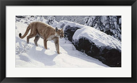 Framed Soft Snow- Cougar Print
