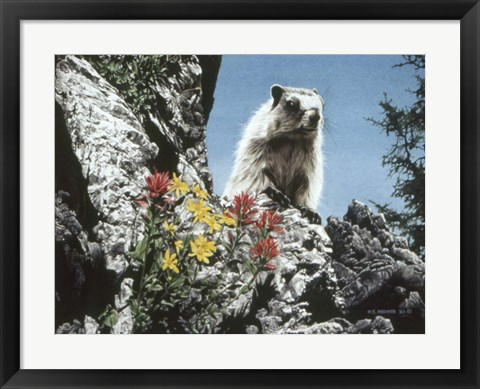 Framed Young Marmot Print