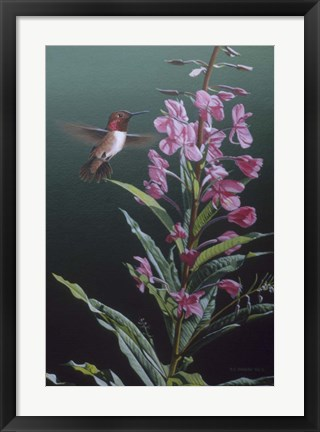 Framed Fireweed Print