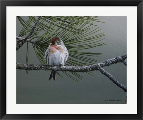 Framed Red Poll Print