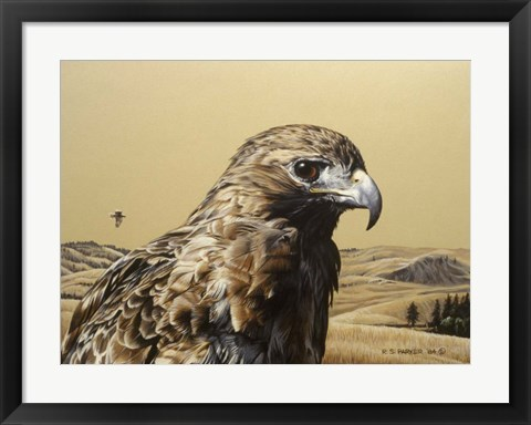 Framed Red Tailed Hawk 2 Print